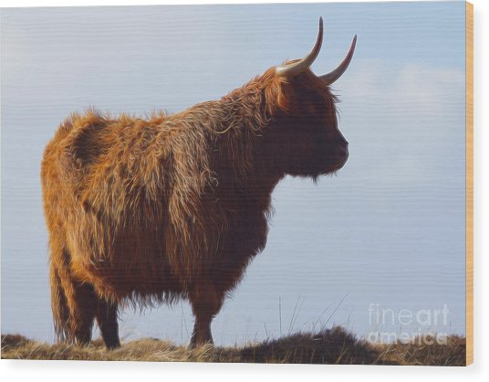 The Highland Cow Wood Print