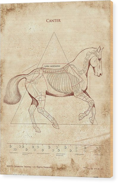 The Horse's Canter Revealed Wood Print