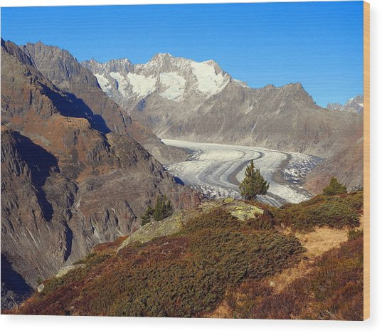 The Large Aletsch Glacier In Switzerland Wood Print
