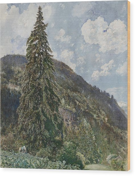 The Old Spruce In Bad Gastein Wood Print