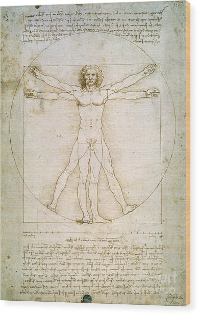 The Proportions Of The Human Figure Wood Print