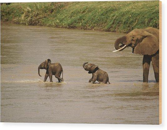 Tiny Elephants Wood Print