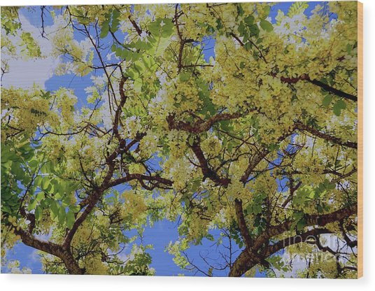 Trees And Flowers In Hawaii Wood Print
