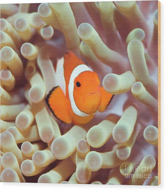 Tropical Fish Clownfish Wood Print