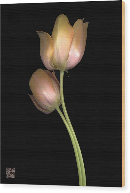 Tulip Wood Print by Lloyd Liebes