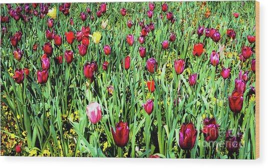 Tulips In Bloom Wood Print by D Davila