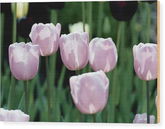 Tulips Wood Print by Pat Carosone