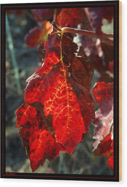 Vine Leaf At Fall Wood Print