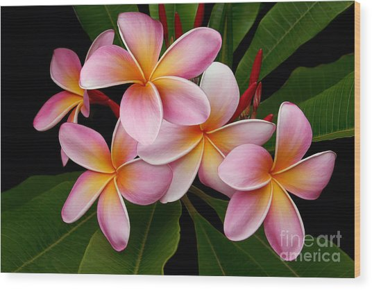 Wailua Sweet Love Wood Print