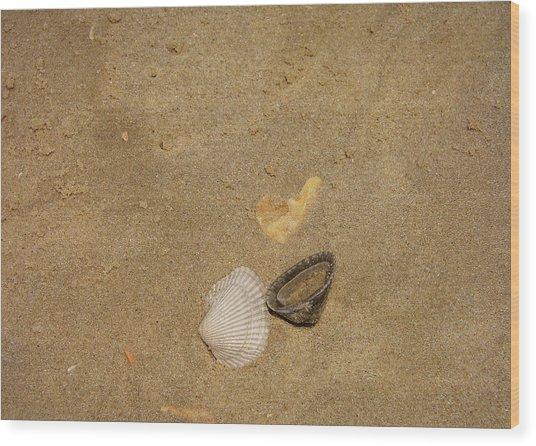 Shells Washed Ashore Wood Print by JAMART Photography