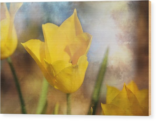 Water Lily Tulip Flower Wood Print