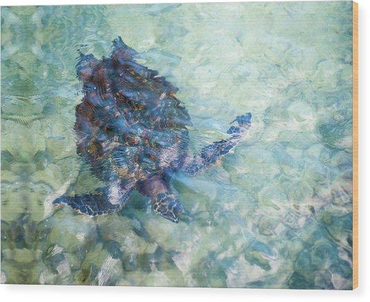 Watercolor Turtle Wood Print