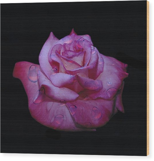Watered Red Rose Wood Print