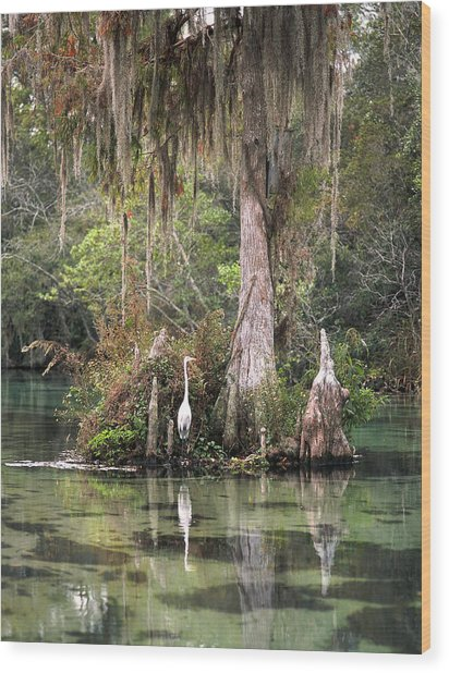 Weeki Wachee River Wood Print