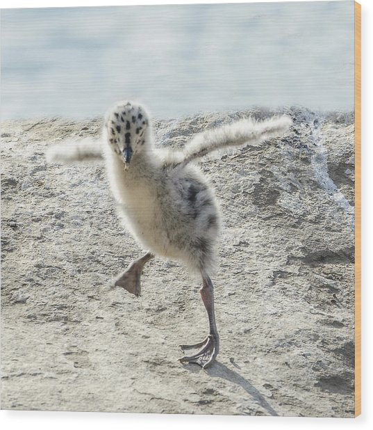 Western Gull Chick Dancing Wood Print