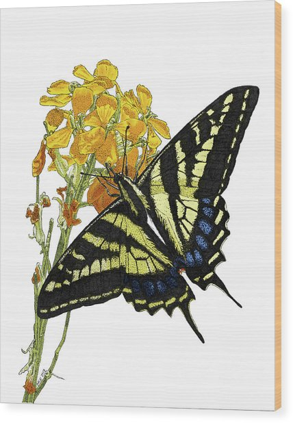 Western Tiger Swallowtail On A Western Wallflower Wood Print