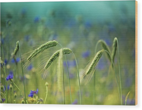 Wheat And Corn Flowers Wood Print