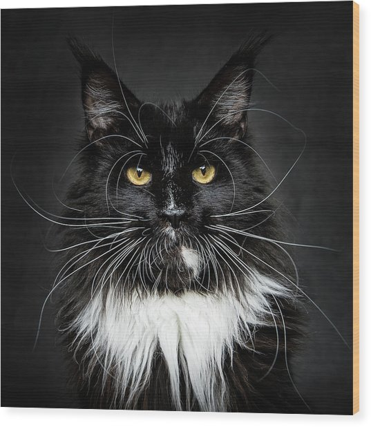 Wood Print featuring the photograph Whiskers  by Robert Sijka