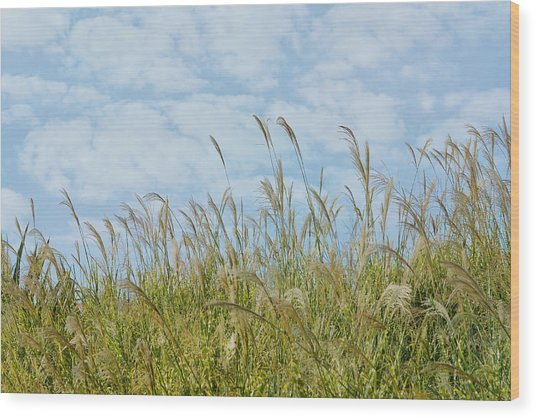 Whispers Of Summer Wood Print