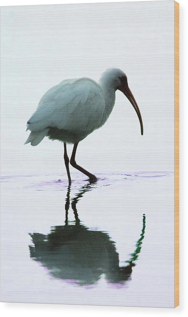 White Ibis Wood Print by Jerry Weinstein