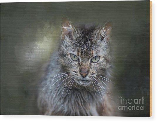 Wild Cat Portrait Wood Print