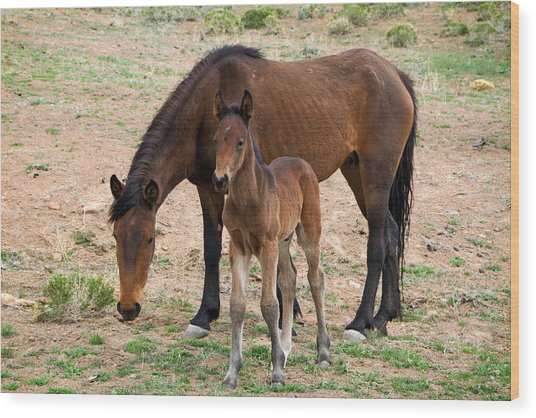 Wild Mustang Mare And Foal Wood Print