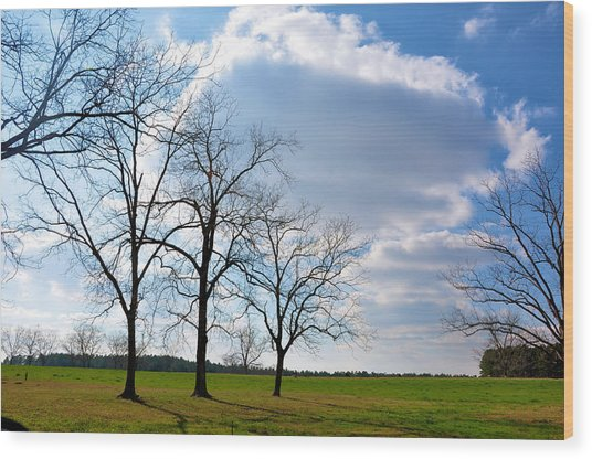 Winter Trees Wood Print by Jan Amiss Photography