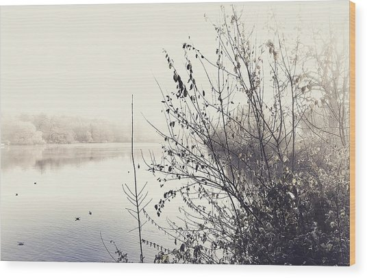 Winter's Morning At The Mote  Wood Print by Stuart Ellesmere