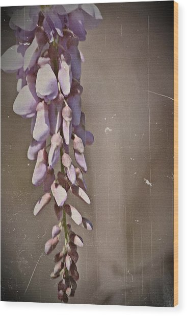 Wisteria Dreams- Fine Art Wood Print