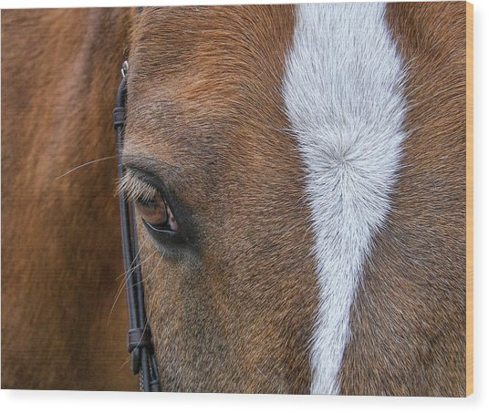 Harry The Wonder Pony Wood Print by JAMART Photography