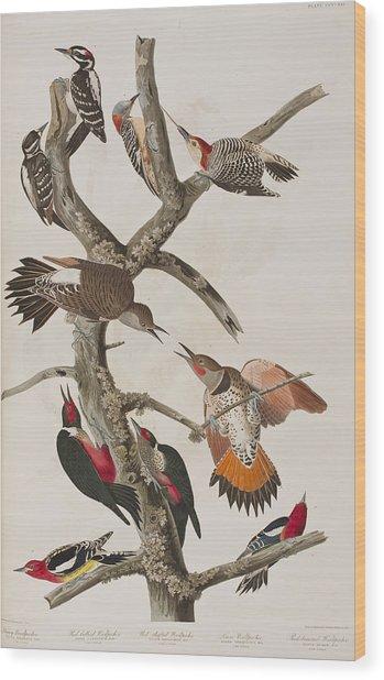 Woodpeckers Wood Print