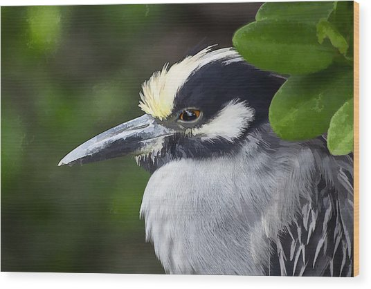 Yellow-crowned Night Heron Wood Print