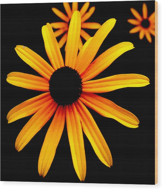 Yellow Flower Wood Print by Robert Scauzillo