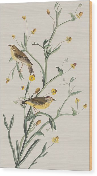 Yellow Red-poll Warbler Wood Print