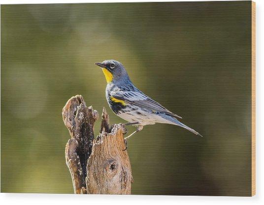 Yellow-rumped Warbler Wood Print