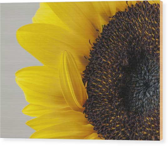 Yellow Sunflower Photograph Wood Print