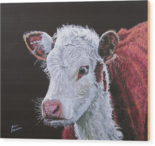 Young Bull Wood Print by Stan Hamilton