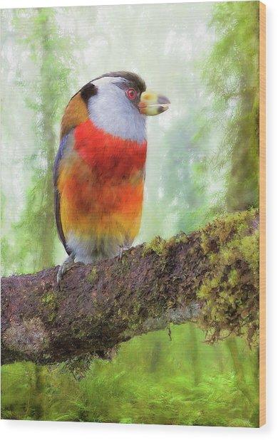 Toucan Barbet Wood Print