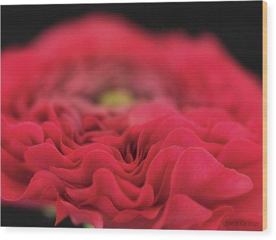 Ranunculus In Bloom Wood Print by Anne Geddes