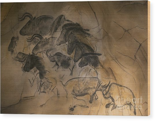 150501p084 Wood Print
