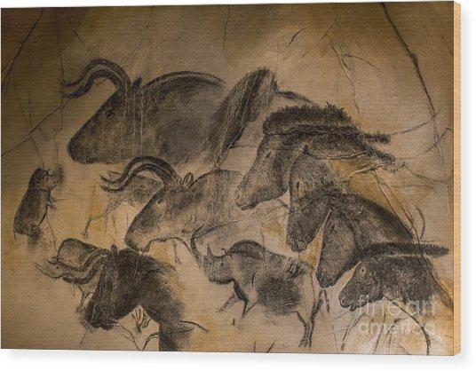 Chauvet Wood Print