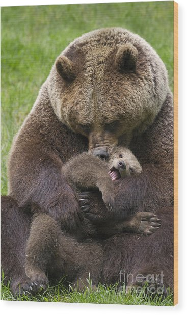 Mother Bear Cuddling Cub Wood Print