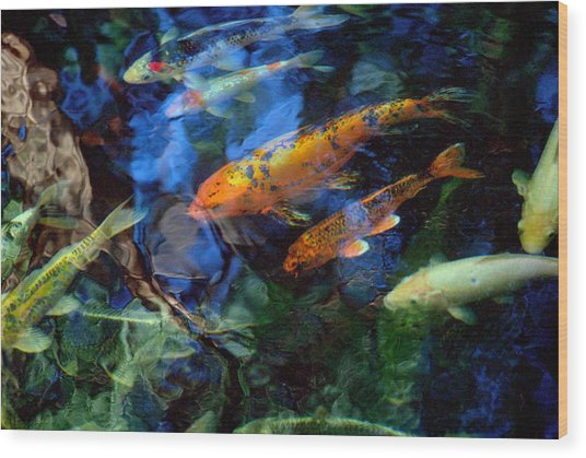 The Koi Pond Wood Print by Marc Bittan