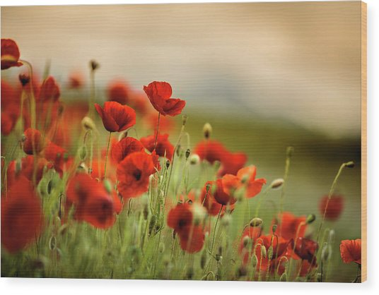 Summer Poppy Meadow Wood Print