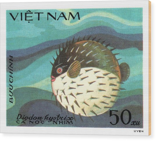 1984 Vietnam Spotted Porcupinefish Postage Stamp Wood Print