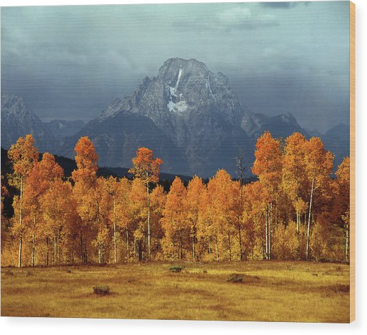 1m9235 Mt. Moran In Autumn Wood Print