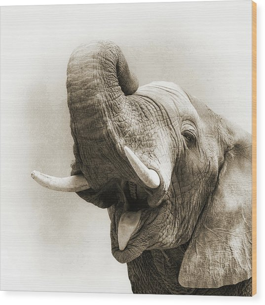 African Elephant Closeup Square Wood Print