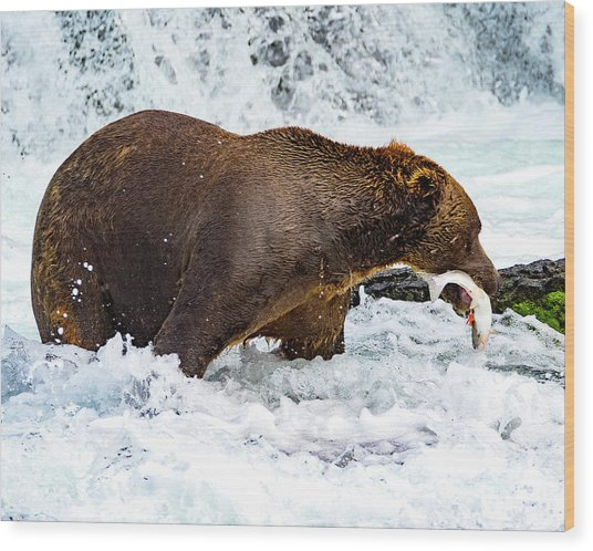 Alaska Brown Bear Wood Print