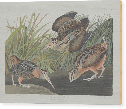 American Woodcock Wood Print