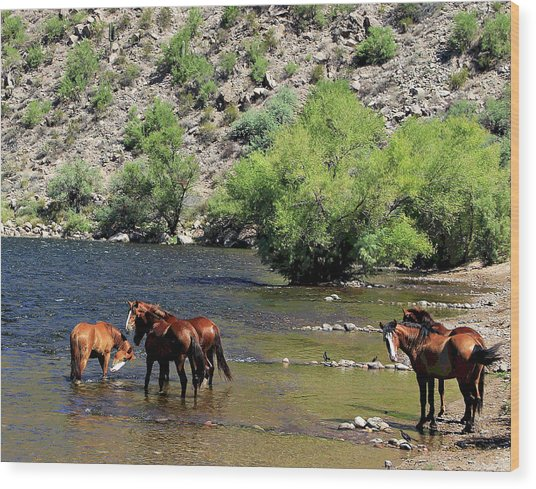 Arizona Wild Horses Wood Print